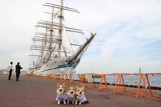 日本丸 2014-5-27-14