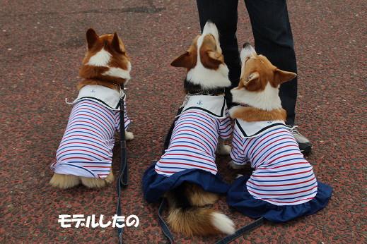 日本丸 2014-5-27-15