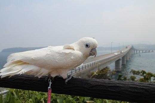 ピノ初角島 2014-5-2-2