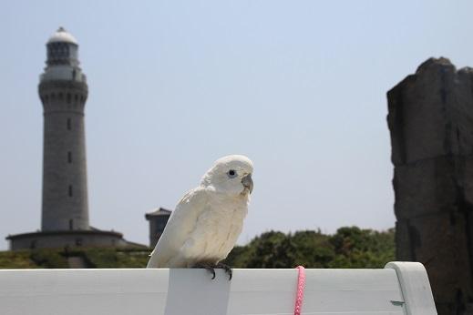 ピノ初角島 2014-5-2-9
