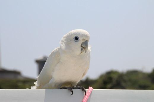 ピノ初角島 2014-5-2-10