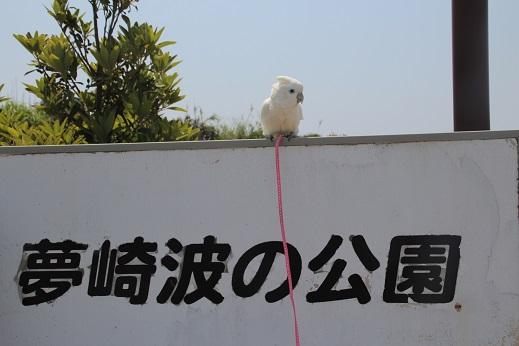ピノ初角島 2014-5-2-11