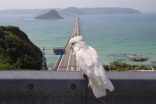 ピノ初角島 2014-5-2-15