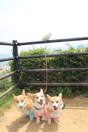 しま心と礼拝堂 2014-5-2-2