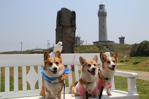 波の公園 2014-5-2-3