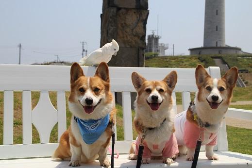 波の公園 2014-5-2-4