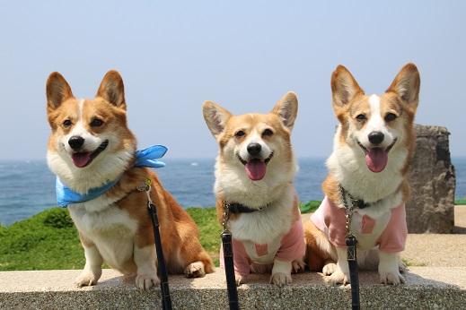 波の公園 2014-5-2-6