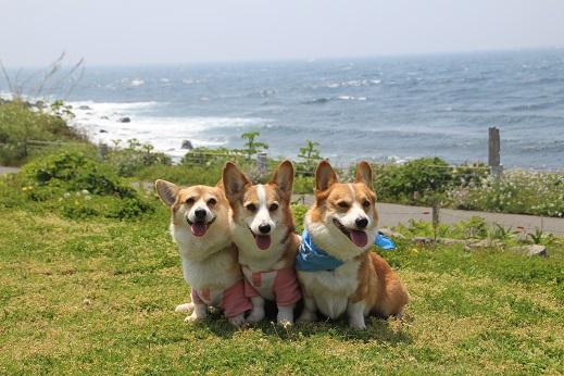 波の公園 2014-5-2-7