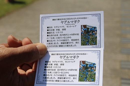 海中その2 2014-5-3-2