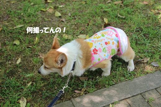 海中その4 2014-5-5-3