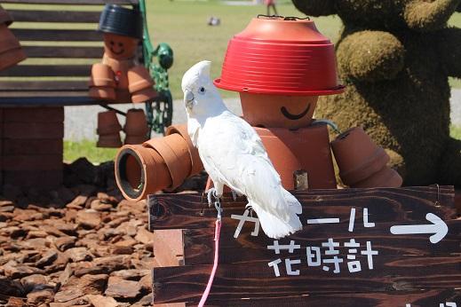 海中その4 2014-5-3-10