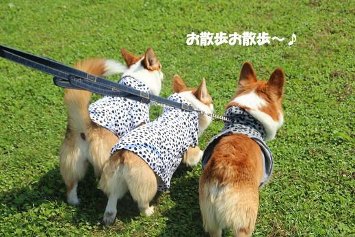 遠賀川河川敷 2014-6-29-1
