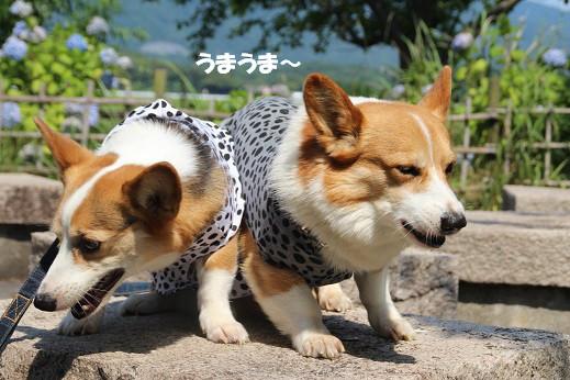 遠賀川河川敷 2014-6-29-5