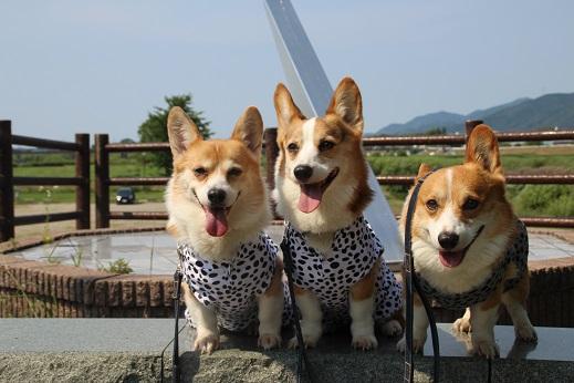 遠賀川河川敷 2014-6-29-9