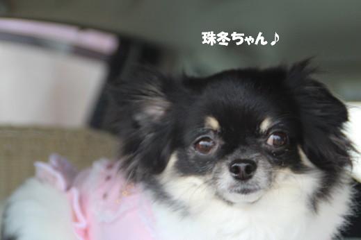 はません1 2014-7-13-4