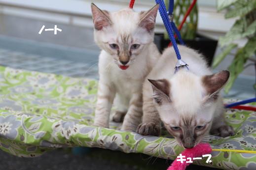 ダイキ福岡東 2014-7-27-7