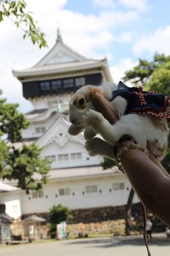 うさんぽ 小倉城 2014-8-30-2