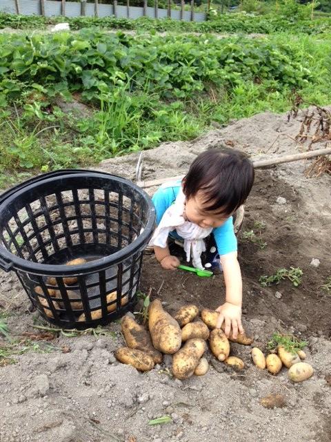芋掘り 3 (480x640)