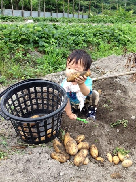 芋掘り 4 (480x640)