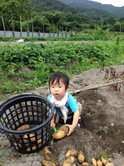 芋掘り8 (480x640)