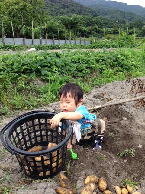 芋掘り9 (480x640)