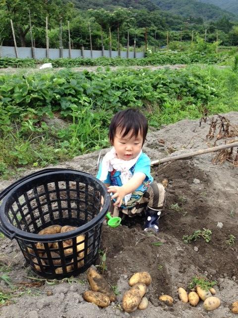 芋掘り10 (480x640)