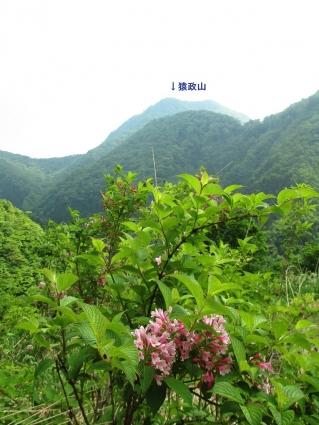 SYK(猿政山) 021-001