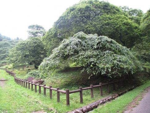 熊城山(天狗シデ)M 049
