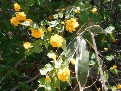 高鈴山の花2