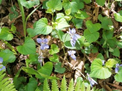 高鈴山の花3