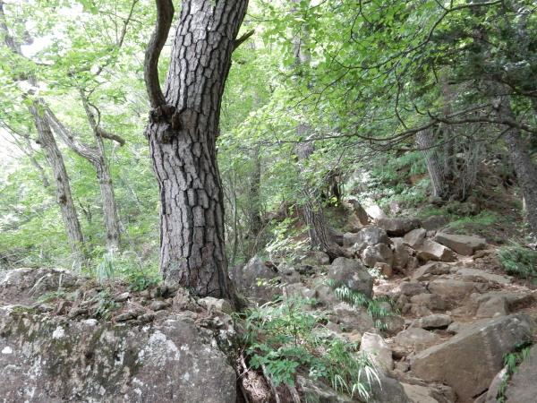 三つ峠岩場1