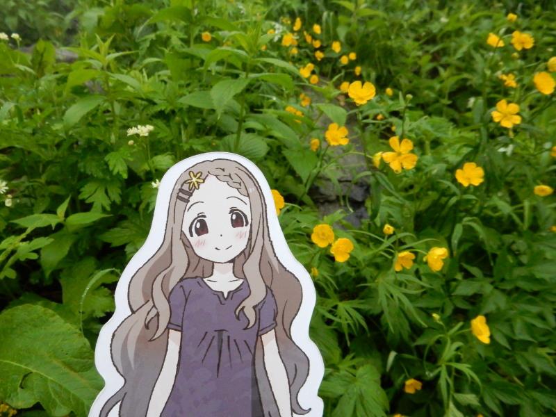 シナノキンバイ花畑とここな