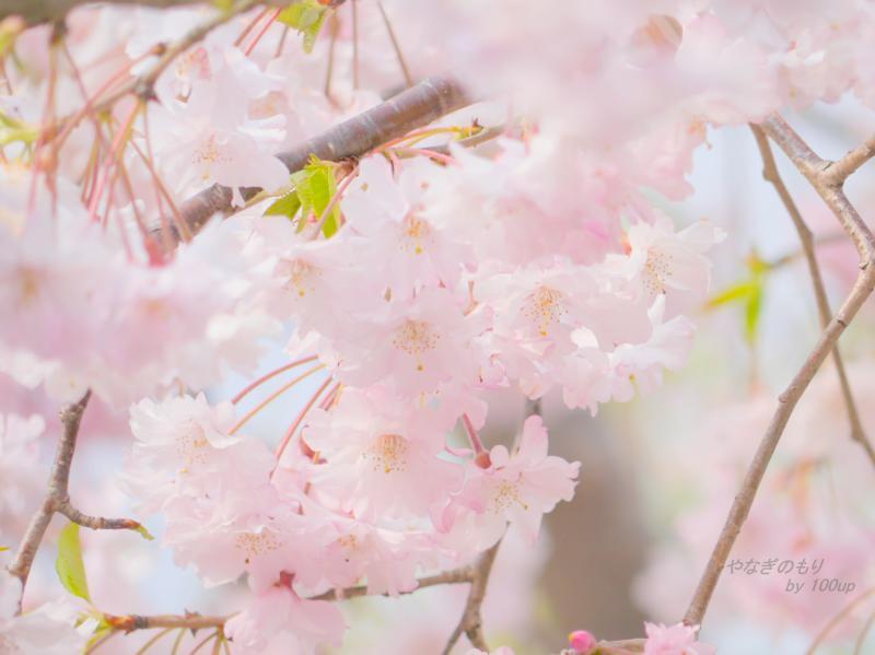2014,4,10『春の散策2』