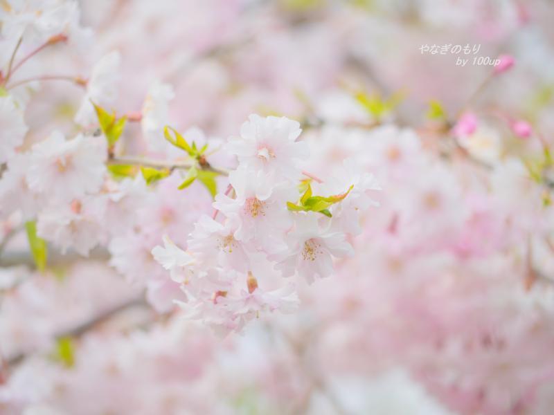 2014,4,10『春の散策3』