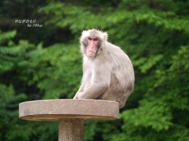 2014.5.6多摩動物公園2