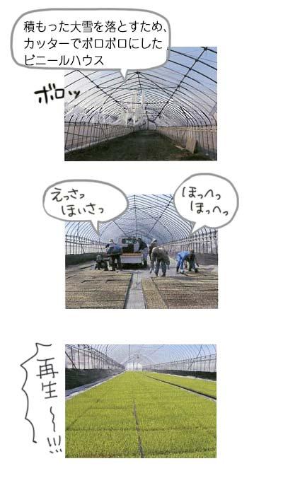 Y子農園春