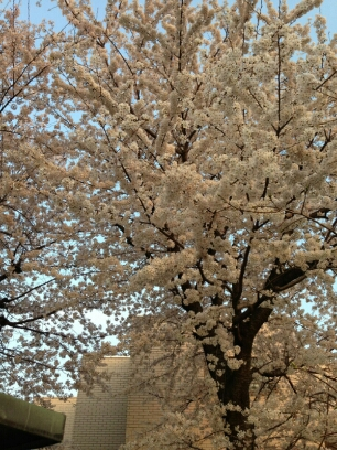 fc2_2014-04-02_00-53-30-616.jpg