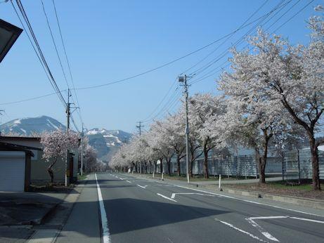 DSCN4935_sakura.jpg