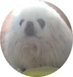 imageぴ-ミミちゃん-crop