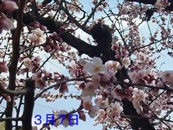 P1030334_20140612205902cb6.jpg
