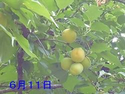 P1060050_201406122102033cd.jpg