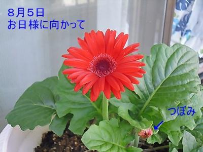 P1060981.jpg