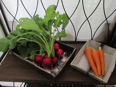 新鮮野菜と手作りのお皿