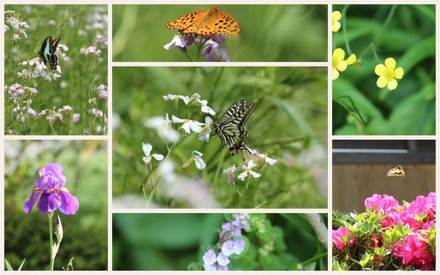 140505花と蝶