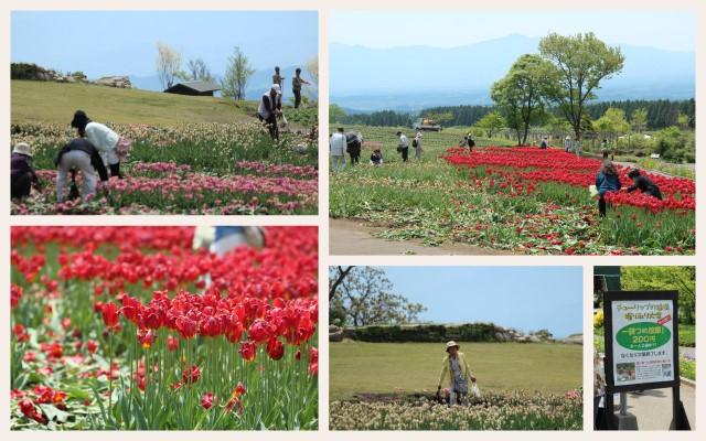 140510くじゅう花公園1