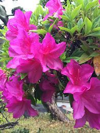 flower201451.jpg