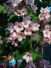 flower201452.jpg