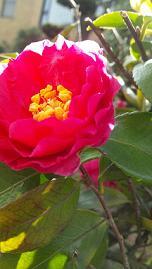 flowers201412.jpg