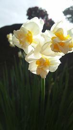 flowers201413.jpg