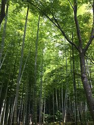 kyoto2014613.jpg